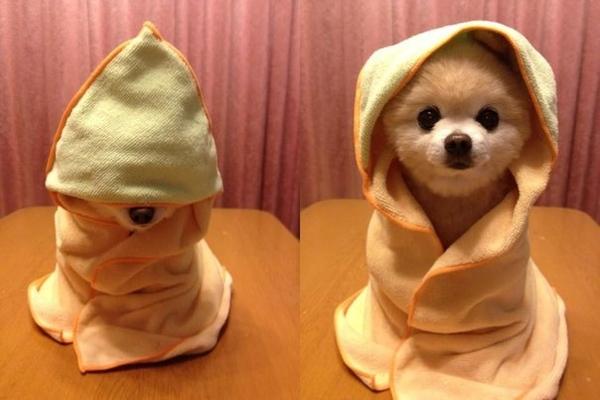 yavru köpek eğitimi